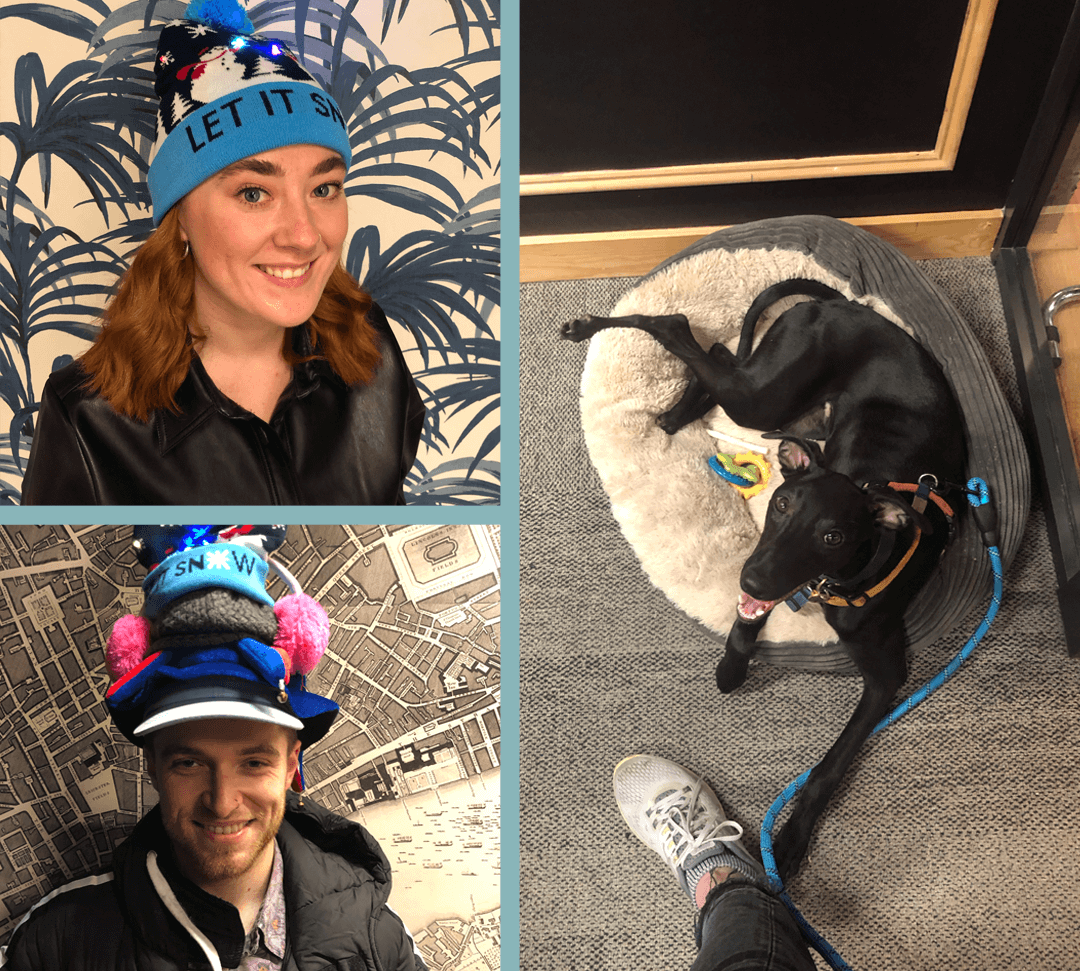 Introducing new team members: Alice, George and office dog Victor